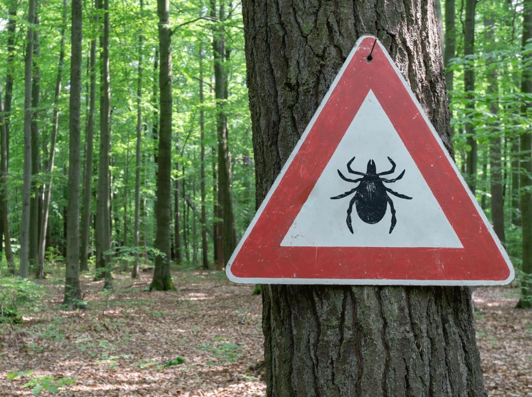 Sehr gefährlich: Neue Zeckenart sucht Deutschland heim!